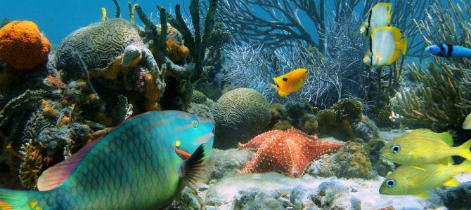 Na tapecie – świat podwodny