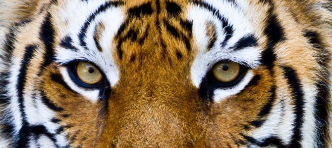 Oko w oko z dziką naturą