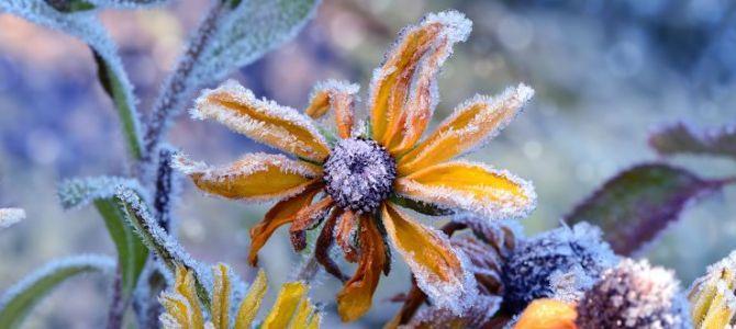 Obrazy inspirowane zimą