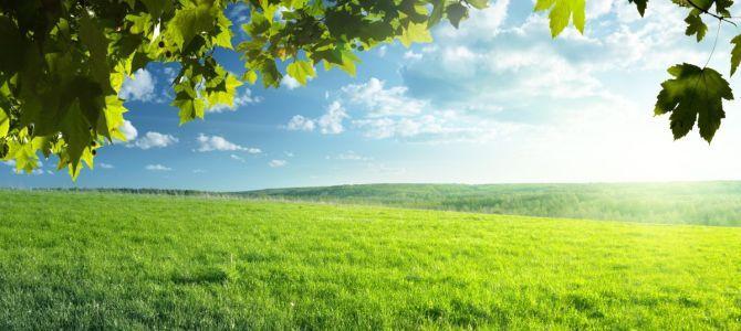 Zielone widoki
