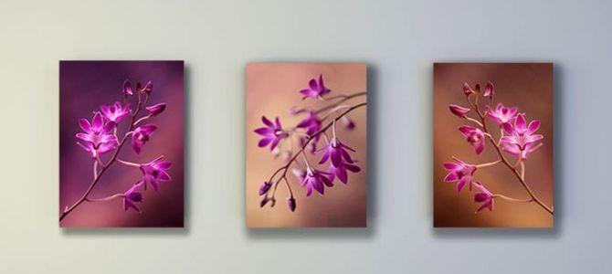 Orchidea – ciekawy temat dekoracji ściennych