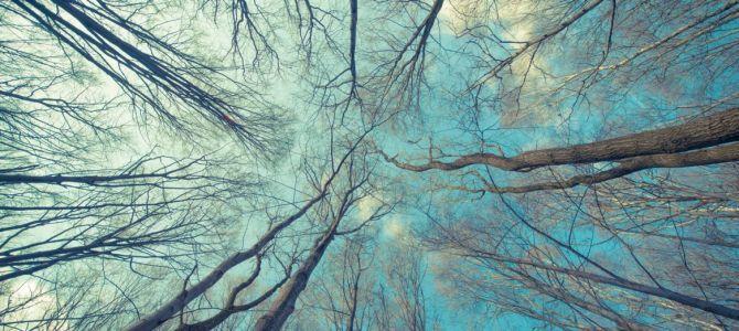 Ciekawy temat na tapetę – drzewa