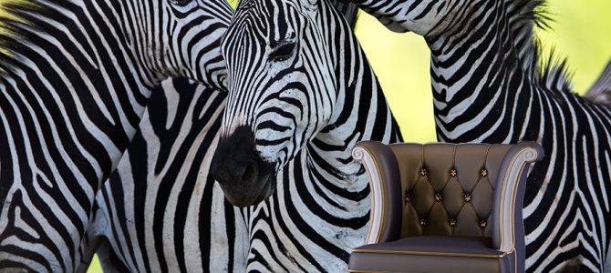 Dzikie zwierzęta na tapecie